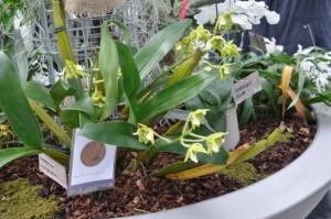 Stand GRO, Orchideen Bern 2016