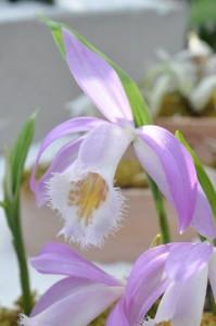Stand du GRO, Orchideen Bern 2016